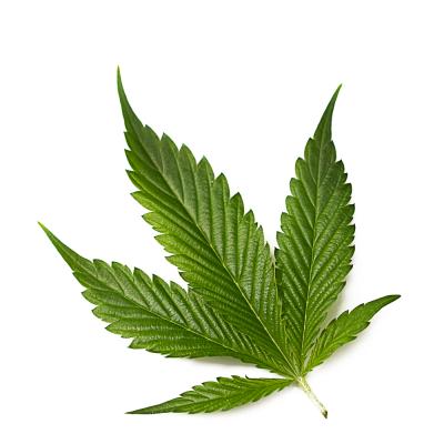 Alternative Medicine Association (AMA) Cannabis leaf